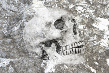 Side view of human skull in rock, clipping path