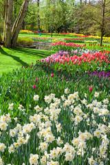 Fototapete - Cheerful Spring Flowers in Keukenhof Garden, Lisse, Netherlands