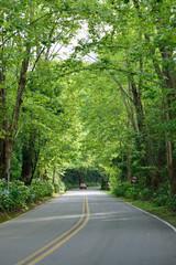 Curvas de uma estrada arborizada