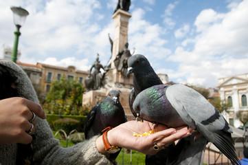 Pigeons Hand Fed - La Paz - Bolivia