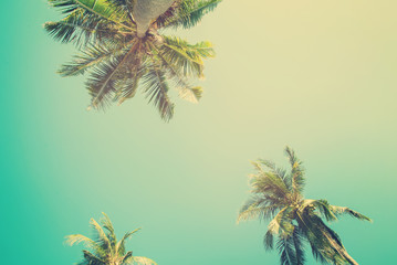 Tropical  background with palm trees in sun light. Vintage