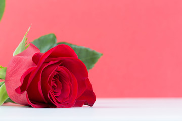 Red rose with a ring