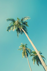 Tropical  background with palm trees in sun light. Travel design
