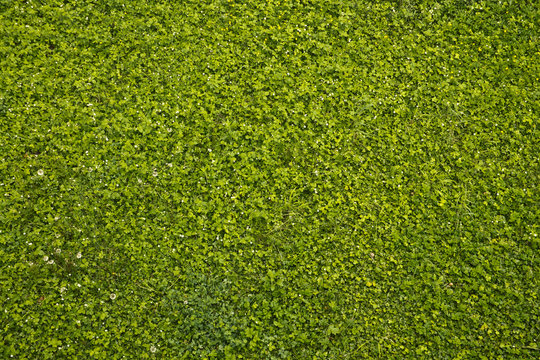 Зеленый газон под стенами замка в Ужгороде, Украина