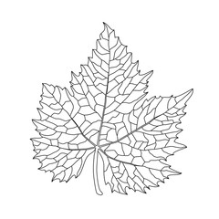 Black on white grape leaf line art