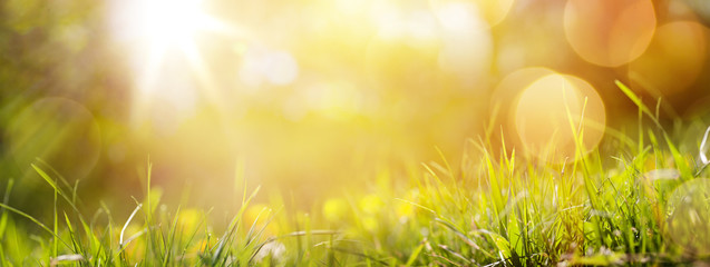 Fototapete - art abstract spring background or summer background with fresh g