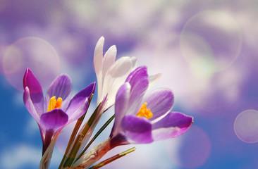 flower blossom in spring background