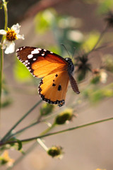 Orange, black and white butterfly on plant stem