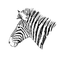Sketch of a zebra
