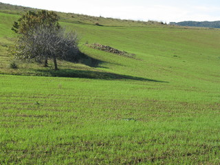 Grazing land in the south Sardinia