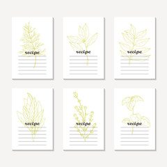 Recipe cards collection with hand drawn spicy herbs. Sketched dill, bay leaf, curry, sage, basil, thyme