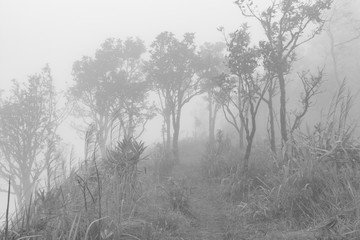 black and white image of tree trunks and foggy morning