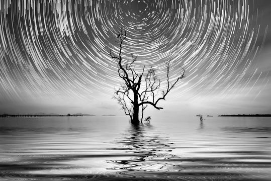 Alone tree and star trail Photography for your interior.