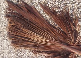 Fotos de palmas secas 28