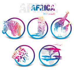 Colorful icon of africa animals