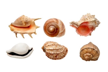 sea shells on a white background Flat in composition