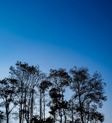Tree silhouettes and sky blue.