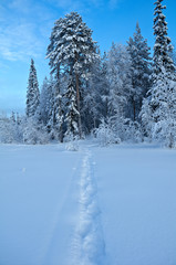 Printed kitchen splashbacks Light blue Trail in the snow