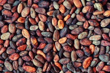 pattern of the cocoa bean