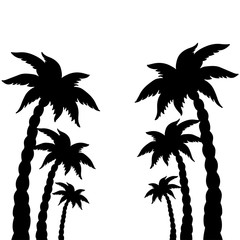 Coconut palms trees black silhouettes isolated on white background