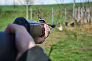 Hunter shooting wild hens, Hunter aim his target,  Jaeger aim on his hunting ground, Poacher shooting, Hunter aim with rifle, gun, weapon, air gun,
