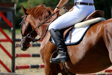 Head-shot of a show jumper horse during training with unidentifi