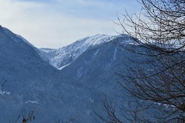 Verschneite Berge und Wälder