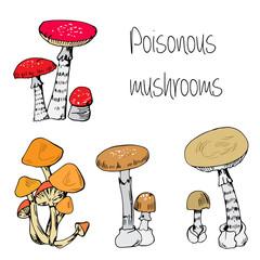 Type of poisonous mushrooms