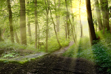 backlight in forest