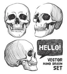 Skulls. Vintage Vector illustration