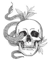 Skull and Snake. Vintage Vector illustration