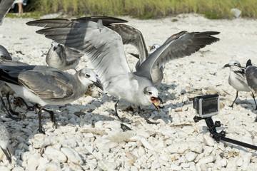 Flying white seagull on a pale blue background, focus on beak