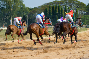 racing horses starting a race