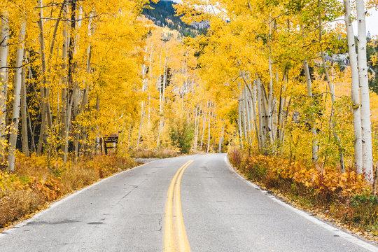 Aspen Road in autumn color