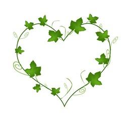 Green Ivy Leaves in Beautiful Heart Shape