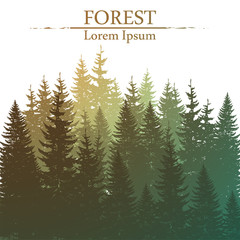 Wild coniferous forest background