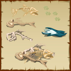 Skeletons of different fish and other items