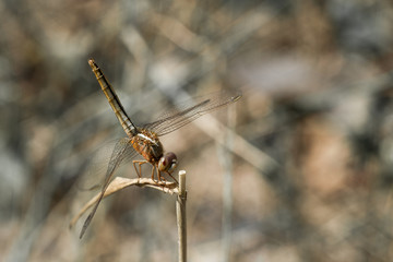 dragonfly on the top of grass water background