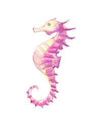 Watercolor vibrant picture of a seahorse