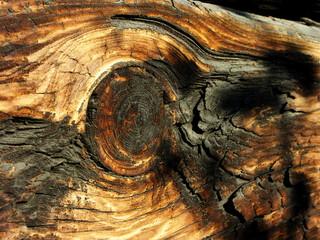 Fototapeta Belka drewniana obraz