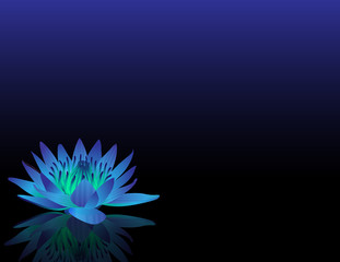 waterlilly_blue_black_bg_wide_eye_level