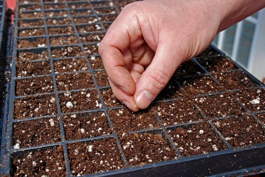 Farmer starting seeds in a greenhouse