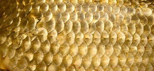 Crucian carp scales, close-up - natural texture