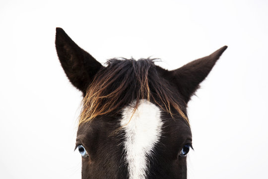 The portrait of black and white horse looking straight