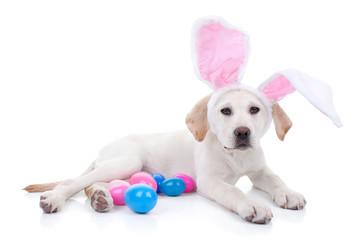 Easter bunny pet dog on Easter egg hunt