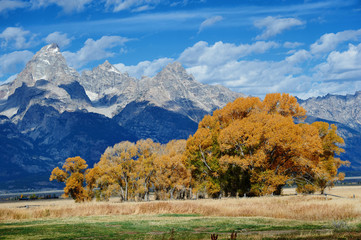 Autumn landscape in Yellowstone, Wyoming, USA