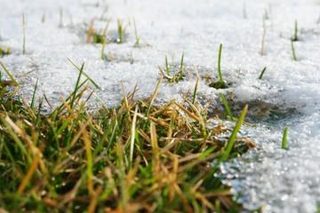 schmelzender schnee gras I