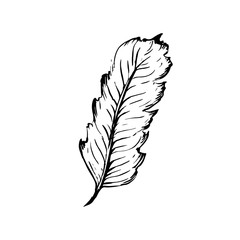 Hand drawn bird feather, Symbol of knowledge, writing and learning. Vector black and white illustration in vintage style isolated on white background.