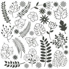 Vector floral set. Vector black illustration