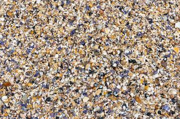 Seashells background. Many sea shells on a beach summer background